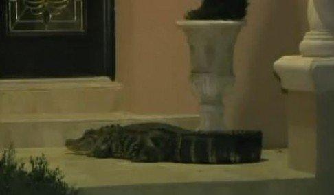 aligator na vratima